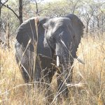 Tydon Safaris Day Tours