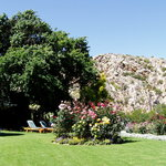 Montagu Vines