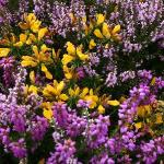 Vibrant Colours on Selworthy Beacon