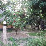  General view, Cashewnut Tree
