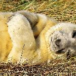  Seals 2
