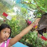  Michelle touching the flying fox at the butterfly garden. :D