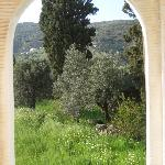 A landscape of olive, cypress and lemon trees