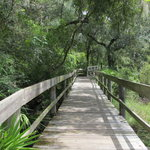 Boardwalk That Runs Parallel To Low Trail Section At Flatwoods Park