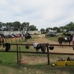 Sally's Riding School