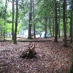  Campsite from the edge of the bog