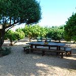  Orange Grove