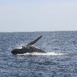 Baleine Provincetown