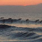 Pelicans flying at sunrise