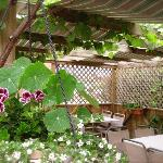 Grape Vine Patio
