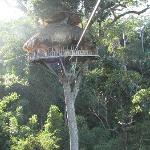 The reason to go - tree houses and zip lines!