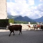 village et vaches