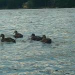 Lucky Duckies enjoy the lake