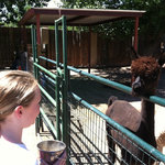 Albuquerque Alpacas