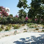  giardino &quot;tropicale&quot;
