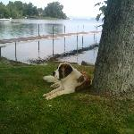 One of Pat's St. Bernard's-just a beautifully friendly dog