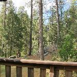 back deck view room #9 Quiet Creek Inn Idyllwild