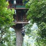 zipping into the treehouse
