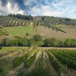 Montechiaro vineyards