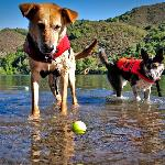 """""""Lucky"""" Lewis and """"Indiana"""" Swam enjoying swiming in Blue Lakes"""
