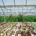 the magic of hydroponic farming