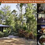 A Splendid Wren Pemberton Bed & Breakfast Retreat