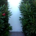 Overgrown bushes by the front door to the room
