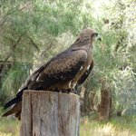 Eagles Heritage Wildlife Centre