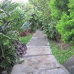 pathways throughout the property