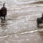 Eddie and Daisy playing in the sea.