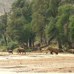 Elephant crossing the river at the lodge
