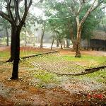 Jungle Lodges Bannerghatta Nature Camp resmi
