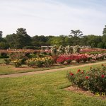‪Norfolk Botanical Garden‬