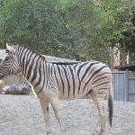 Fresno Zoo-California