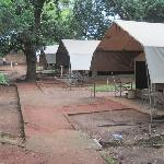 Safari tents under the trees