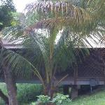 Coconut palms provide plenty of shade