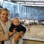 Checking out the lambs and ewes