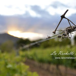 La Rochelle Wine Tours - Day Tours