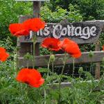 Poppies at the gate