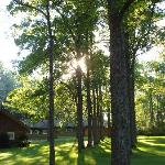 Bilde fra Forest Motel & Woodland Retreat