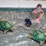 indoor kids pool, turtles looked 3D