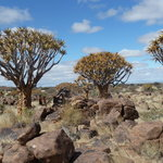 Quivertree Forest and Giant's Playground