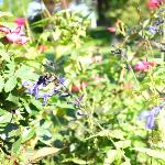 Bees loving the gardens