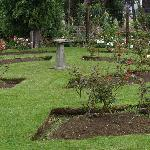  formal rose garden