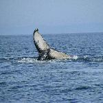  Zodiac Whale Tours - no zoom lens !!