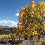 Golden aspens at Sawtooth
