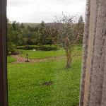  View of the garden from my room