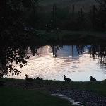 View of the pond and ducks in the garden from my room