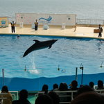 Marine World