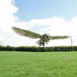 Pembrokeshire Falconry